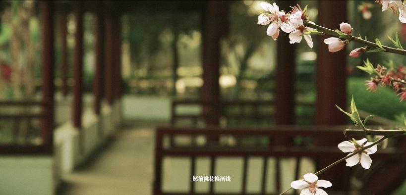 张家港市塘桥高级中学2020年特长生招生简章